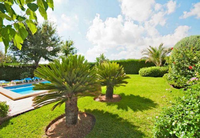 Bonitos árboles en el jardín de Villa Rosaleda