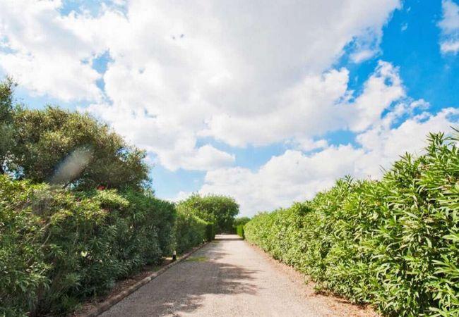 Entrada a la villa rodeada de arbustos