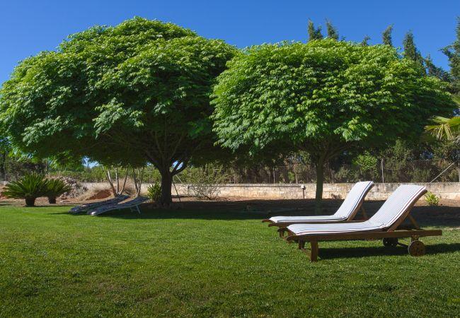 Schattiger Garten unter den Bäumen und Liegestühlen