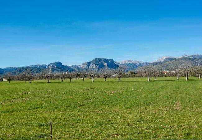 Blick auf die Berge und die grüne Landschaft in Inca
