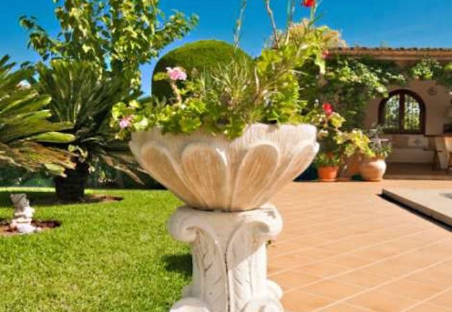 Stone plant pot with nice plant